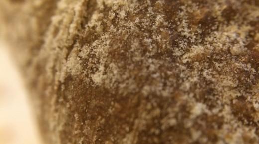 Macro brood